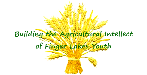 Building the Agricultural Intellect of Finger Lakes Youth